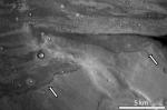 Tsunami-borne sediments on Mars